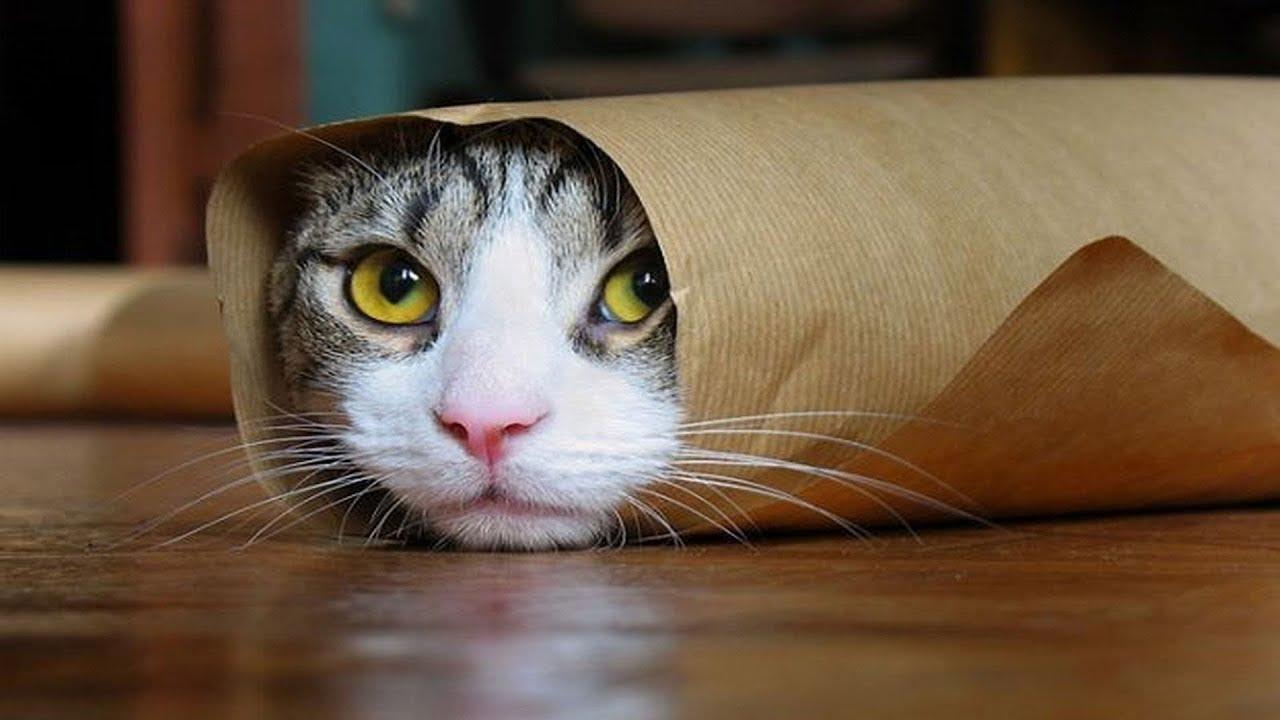 Самые смешные картинки с приколами про кошек