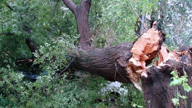 Güclü külək Bakıda 15 ağacı aşırıb, maşınlar əzilib