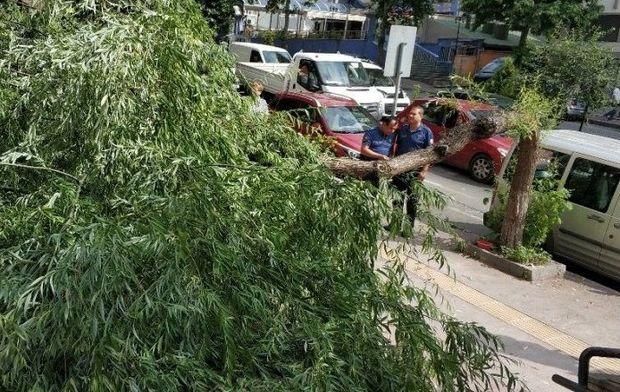 Bakıda güclü külək ağacları sındırır