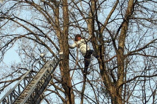 Oğuzda ağacdan yıxılan qadının beli qırıldı