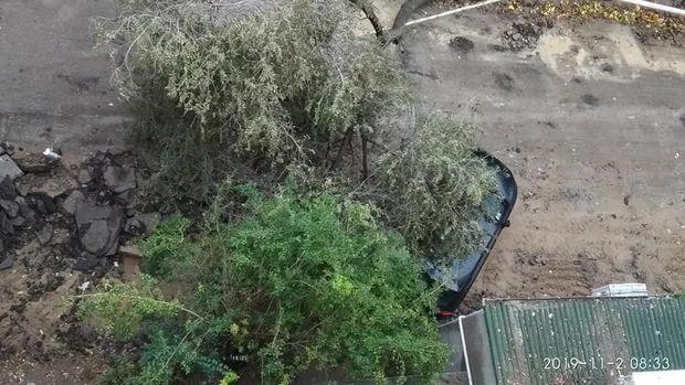 Güclü külək ağacı tanınmış yazarın maşınının üstünə aşırdı - FOTO