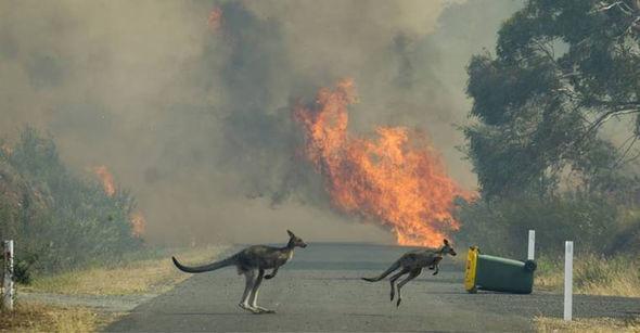 Avstraliyada yanğının dəhşətli nəticəsi: Milyarddan artıq heyvan öldü