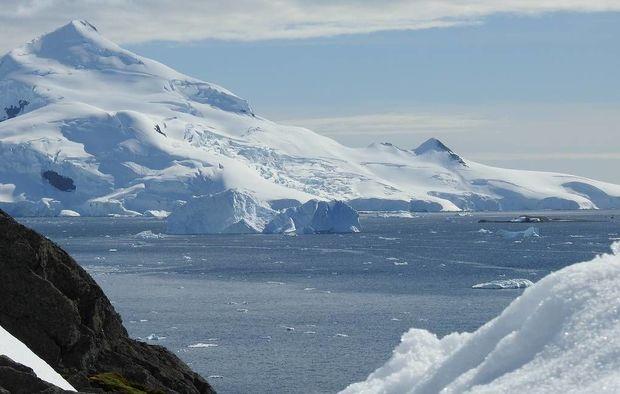 Antarktidada yeni heyvan və bitki növlərinin yaranması proqnozlaşdırılır