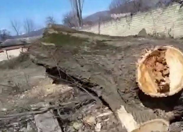 İsmayıllıda ağacları belə məhv etdilər