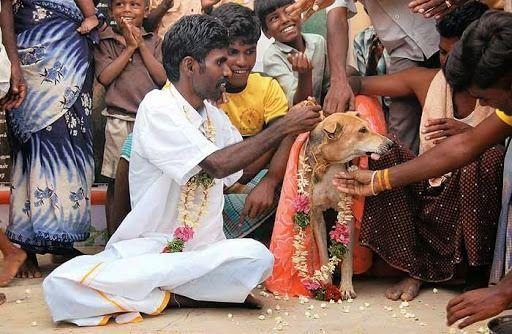 Hindistanda körpəni itlə evləndirdilər – VİDEO